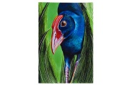 NZ Native Bird - Pukeko